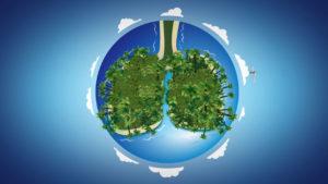 Projekt Ecosia